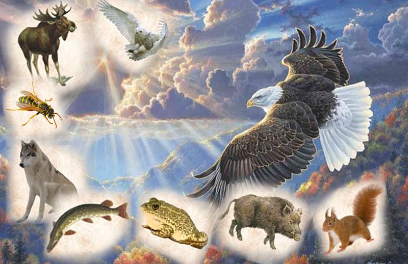 Смотреть 2019 год - какого животного по славянскому календарю | чей год видео